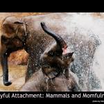 mammals and momfulness